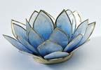 lotusblajpg